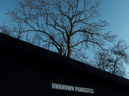 Unknown Parasites